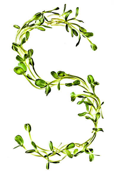 """Photo of Sprouts, laid out in the shape of the letter """"S"""""""