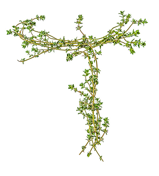 """Photo of Thyme, laid out in the shape of the letter """"T"""""""