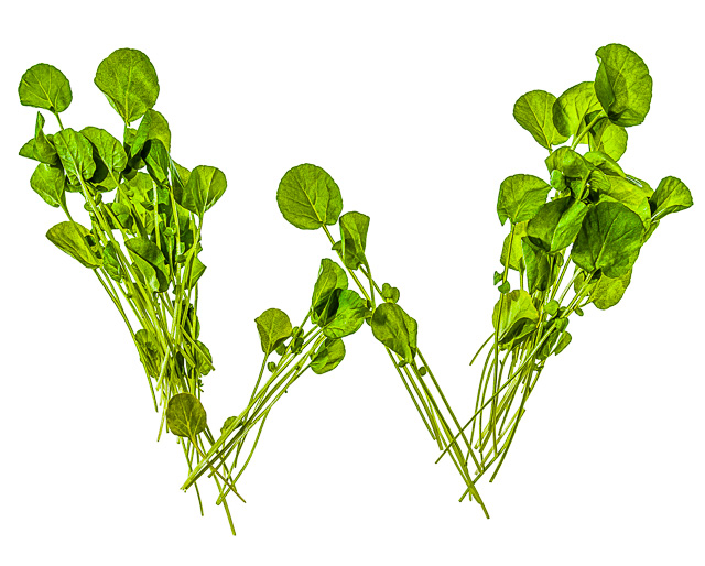 """Photo of Watercress, laid out in the shape of the letter """"W"""""""