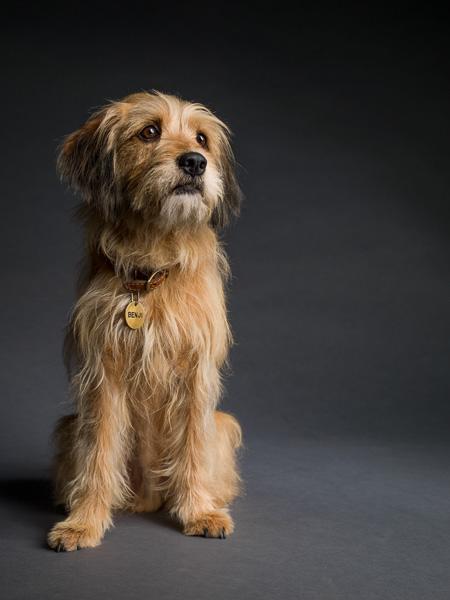 Photograph of Benji the dog
